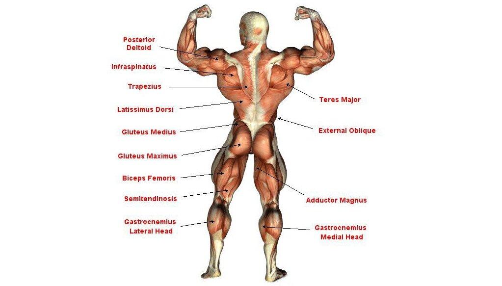 Trening pleców pozwala rozwinąć mięśnie grzbietu