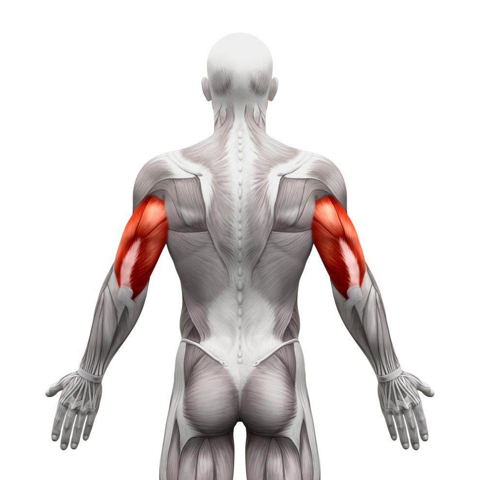 Zdjęcie poglądowe tricepsów