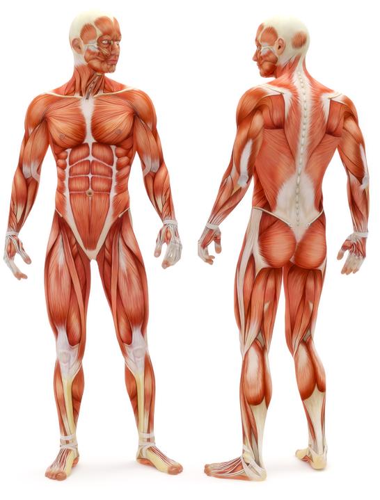 Trening grup mięśniowych pozwala wywołać hipertrofię lokalną