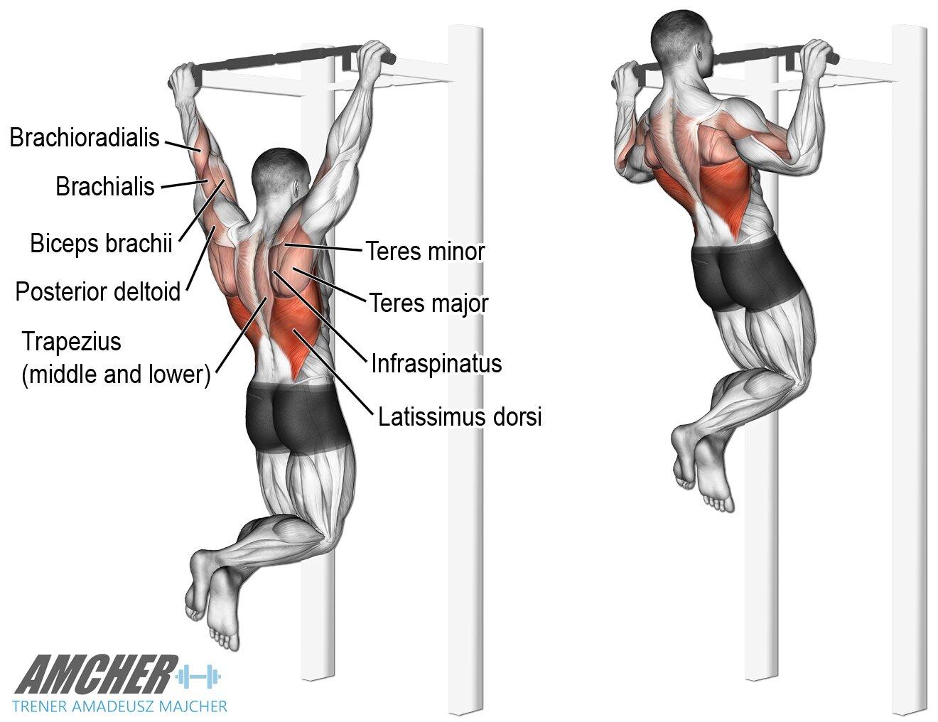 Trening pleców - podciąganie czyli najlepsze ćwiczenia na plecy