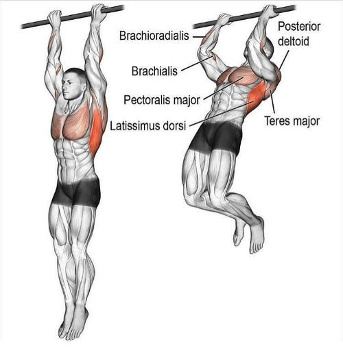 ćwiczenia na biceps - podciąganie