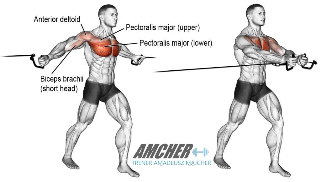 Rozpiętki to idealne ćwiczenia akcesoryjne stymulujące rozwój mięśni klatki piersiowej