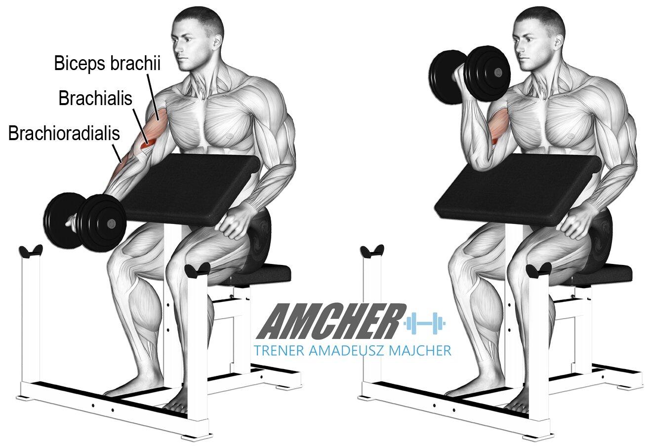 Biceps trening -ćwiczenia na mięśnie dwugłowe