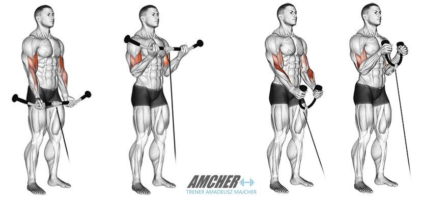 ćwiczenie bicepsów - uginanie ramion na wyciągu dolnym.