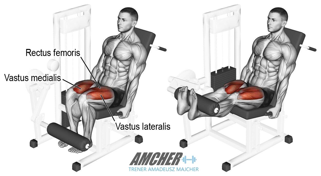 Wyprosty na maszynie - trening nóg