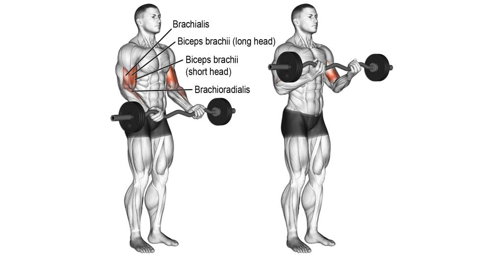 Uginanie ramion ze sztangą stojąc na biceps - prawidłowa technika