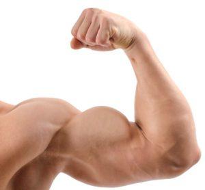 Trening biceps grupy mięśniowe